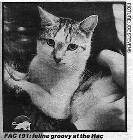 FAC 191 The Hacienda Cat